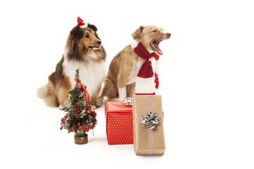 Dogs with presents