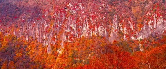 断崖の紅葉