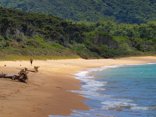Secluded Beach in Abel Tasman National Park, New Zealand