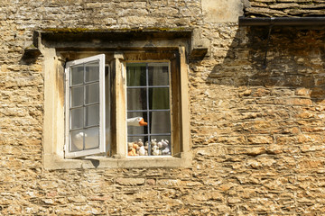 fake goose at stone window , Lacock