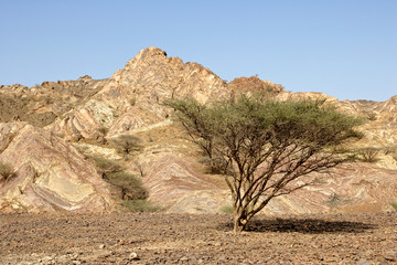 Omani Gravel Plain