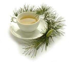 Pinus Fyrreslægten Pino Pine Kiefern Pin Sosna Сосна صنوبر