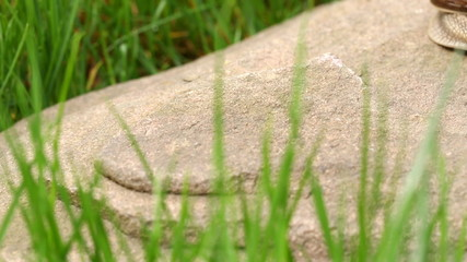 Snail crawling on the rock (dolly shot)