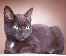 A black cat resting on a cushion on a brown background