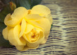 Yellow vintage rose on wicker background