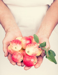 Elderly hands holding organic fresh apples with retro style