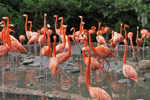 Staande foto Flamingo A flock of Flamingo's in their natural habitat