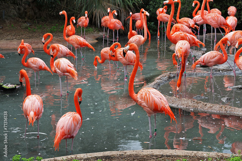 Foto op Canvas Flamingo A flock of Flamingo's in their natural habitat