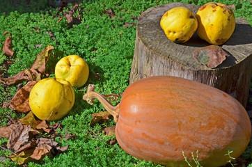 Осенний урожай тыквы