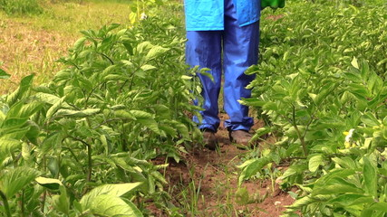 Villager farmer man in blue pants spray potato plants beds