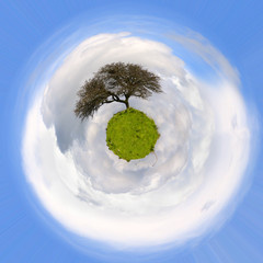 Albero di quercia su un globo verde - Pianeta terra - Globo