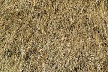 Hay, background