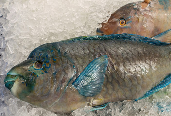 Parrotfish (Scaridae). Photo taken at a fish market in Southern