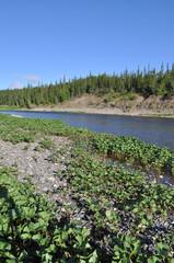 Solar landscape to the North of Ural river.
