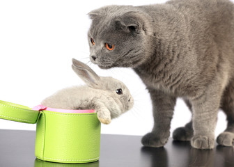 rabbit in a green box and a gray cat