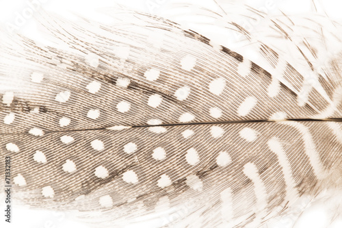 Quill feather close up - 71332183