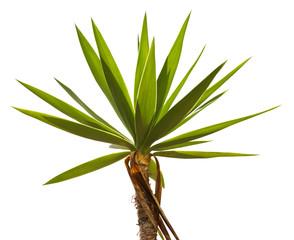Crohn's tropical palm trees