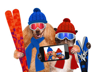 Cat and dog hats taking a selfie together with a smartphone