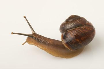 Snail_b