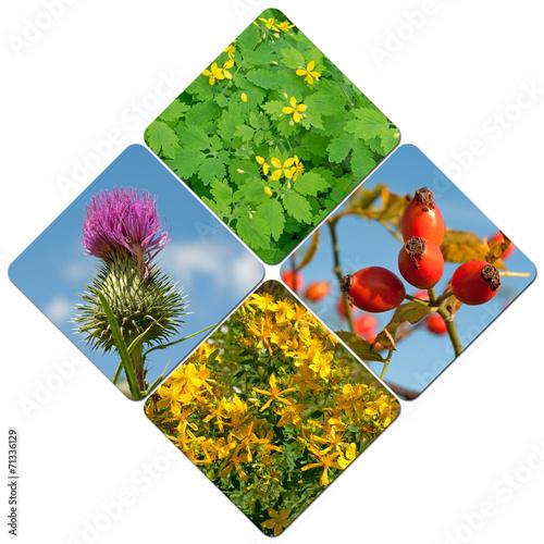 canvas print picture Heilpflanzen