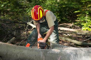 Forstarbeiter mit Schutzkleidung beim Sägen