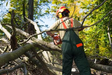 Waldarbeiter kämpft sich durch's Unterholz