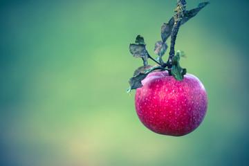 Apfel (digital Crossentwickelt)