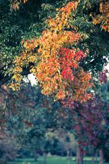 Herbstlaub von Obstbäumen (digital Crossentwickelt)