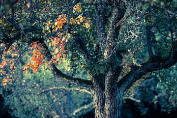 Herbstblätter Obstbaum  (digital Crossentwickelt)