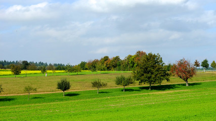 Baumgrundstück