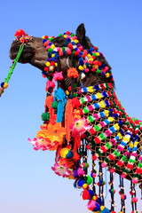 Portrait of decorated camel at Desert Festival, Jaisalmer, India