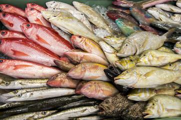 南国の鮮魚
