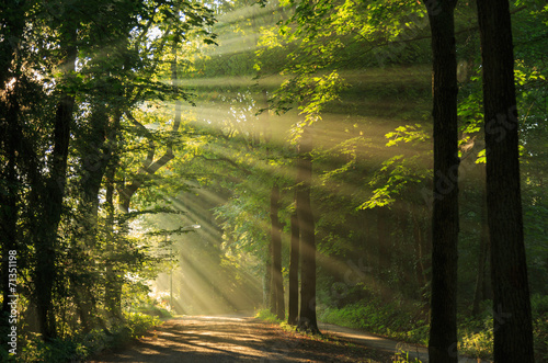 Fotobehang Platteland Sun rays shining through the trees in the forrest.