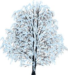 bare tree in blue snow isolated on white