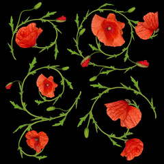red poppy flower ornament elements collection on black