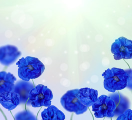 bright blue poppy flowers half frame