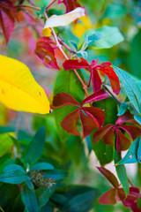 Rote Blätter im Herbst schön