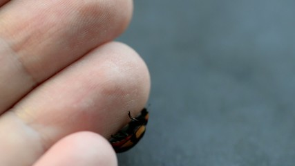 Ladybug crawling on a man's hand. Shallow depth of field.