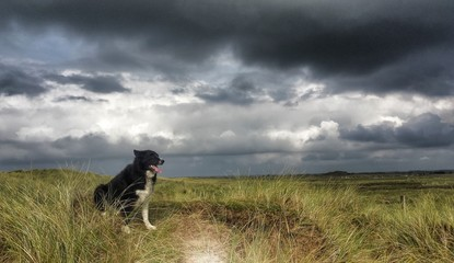 Border collie dog in sand dunes with storm clouds in background