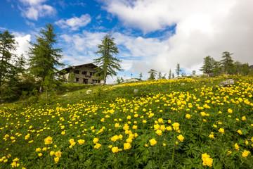 Rifugio e campo fiorito in montagna
