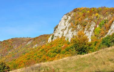 Colorful autumn forest mountain landscape