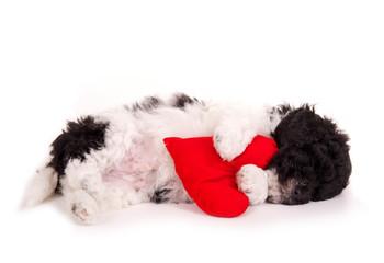 Schlafender Hundewelpe mit Herz