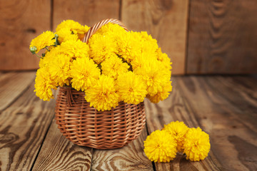 Beautiful bouquet of yellow chrysanthemums flowers in wicker br