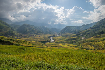 Agriculture and rice terrace in asia