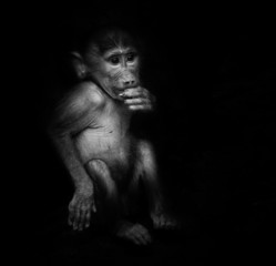 Baby orangutan monkey smiling - black noir background