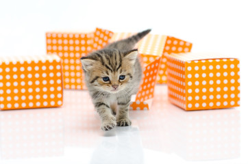 Cute tabby kitten in orange polka dot box on white background