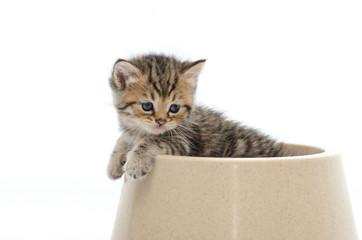Cute tabby kitten in bowl on white back ground