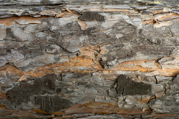 Texture of wood and bark