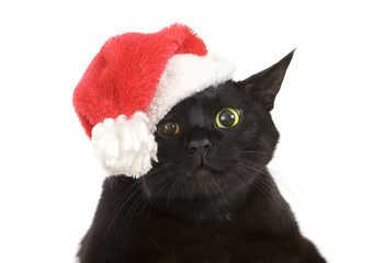 Black Cat Santa - cute christmas cat, Christmas pet with Santa C