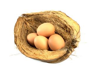 eggs on coir